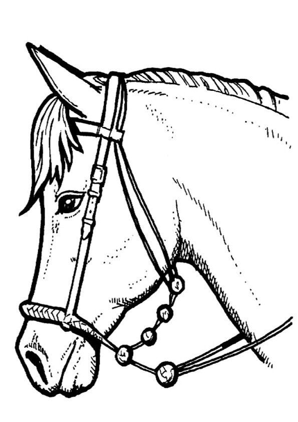 paarden kleurplaat paarden paardenhoofd kleurplaten