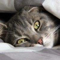 #dogalize Enfermedades de los Gatos: Panleucopenia felina sintomas #dogs #cats #pets