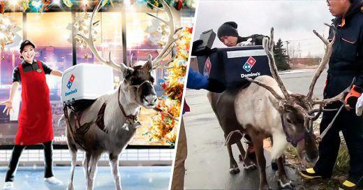 Una pizzería en Japón entrega sus pedidos a  domicilio con renos en esta temporada navideña - https://infouno.cl/una-pizzeria-en-japon-entrega-sus-pedidos-a-domicilio-con-renos-en-esta-temporada-navidena/