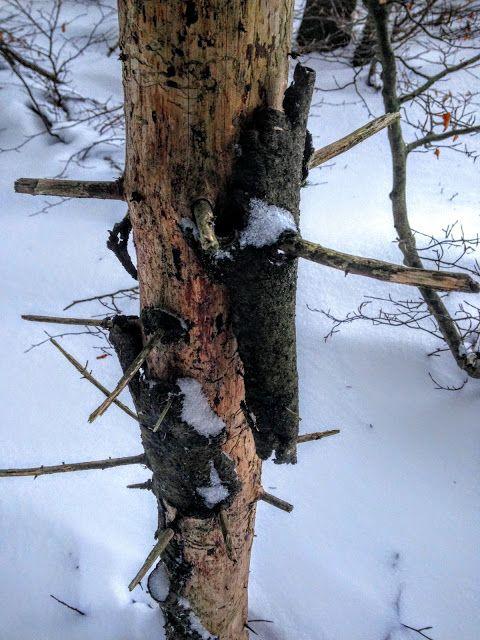 naturensdronning: Dagens utvalgte - 10. jan 2016