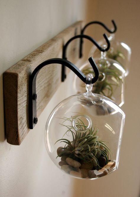 Globe en verre avec succulent à suspendre