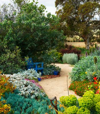 Boats End garden in South Australia. A water-wise garden with Euphorbias and hardy succulents. Photo: Brigid Arnott