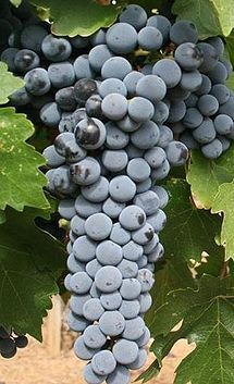Cabernet Sauvignon is one of the world's most widely recognized red wine grape varieties. It is grown in nearly every major wine producing country among a diverse spectrum of climates from Canada's Okanagan Valley to Lebanon's Beqaa Valley. Wikipedia