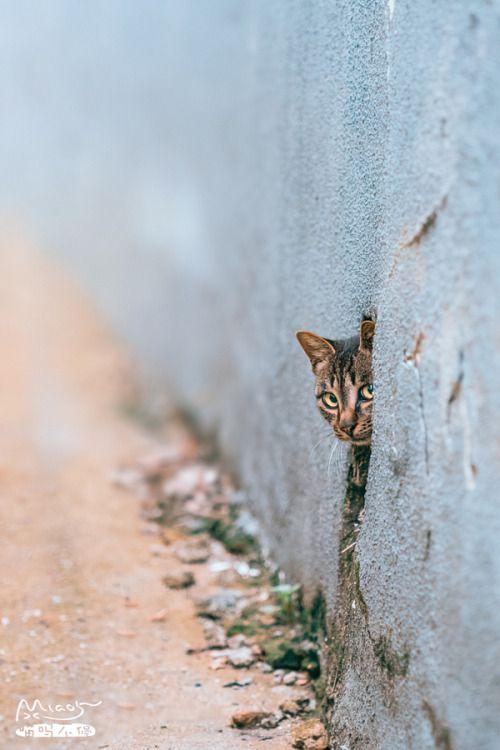 """magical-meow: """" 小婊咂,敢骗我出来! by iMiao5 on 500px.com """""""