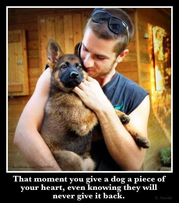 Not sure if this is a German shepherd or Belgian Malinois but is a cute picture