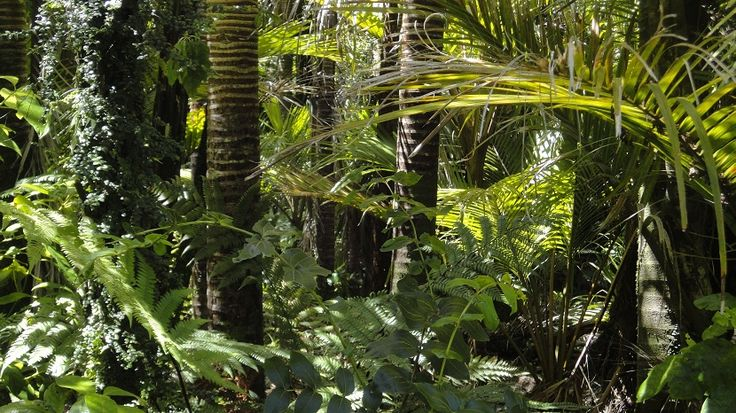 Subastan un área del tamaño de Dinamarca en el Amazonas, para explotación minera - https://www.meteorologiaenred.com/subastan-area-selva-amazonas.html