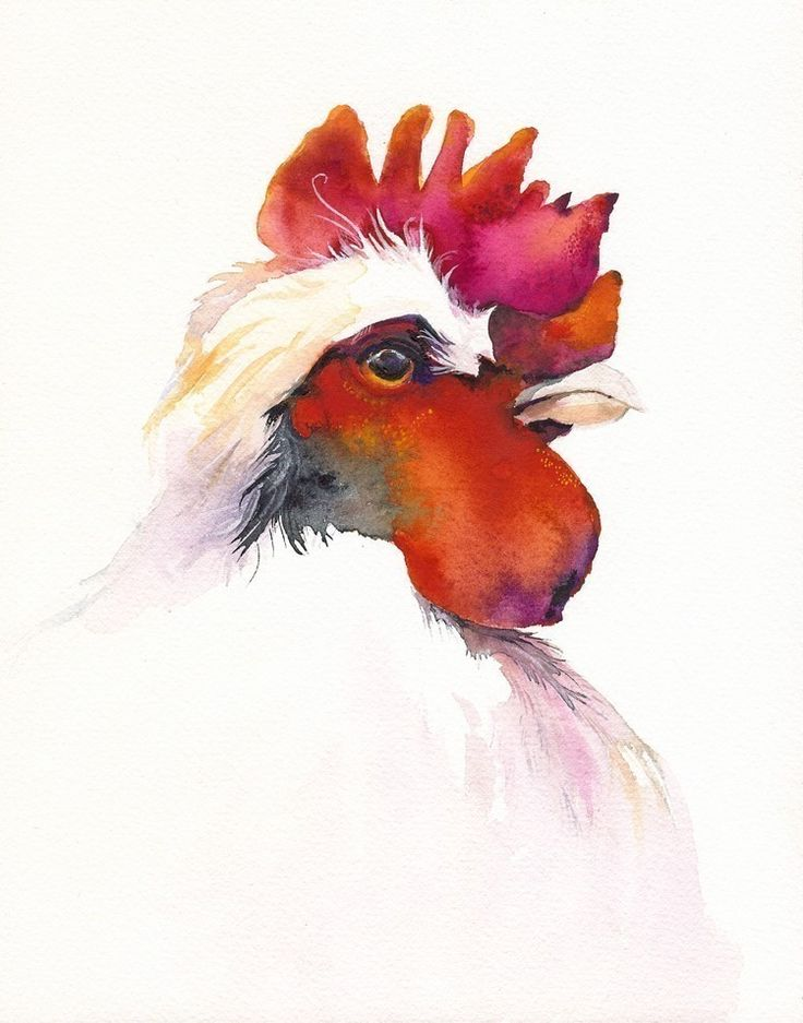Rooster by Amber Alexander