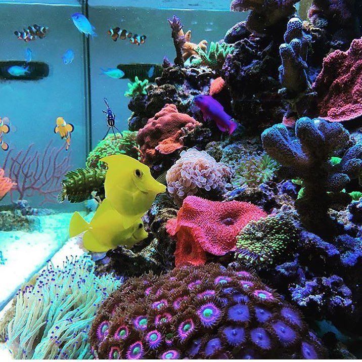 3060 best reef tanks images on pinterest fish aquariums for Fish tank deals