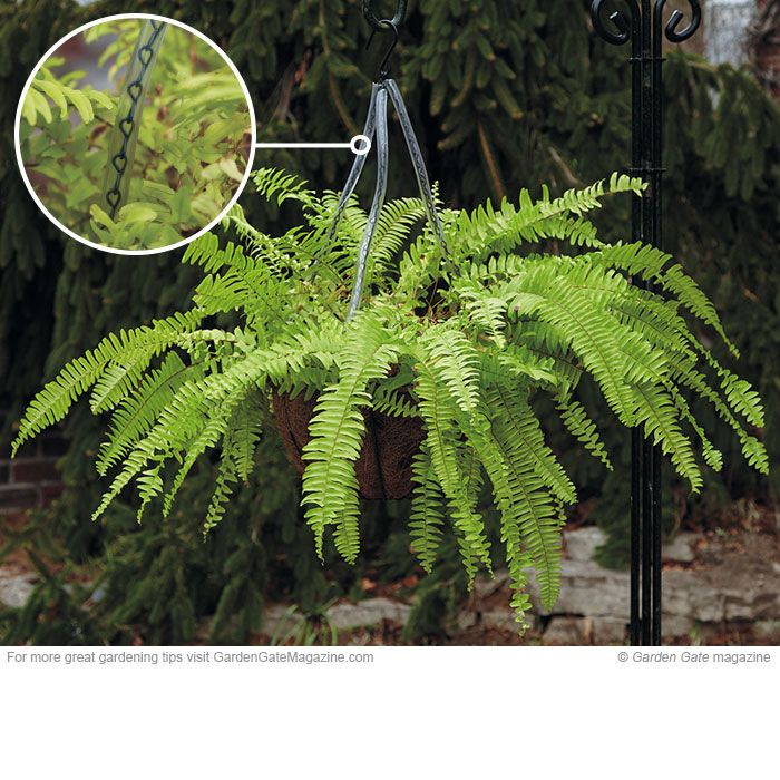 Protection for hanging plants | Garden Gate eNotes