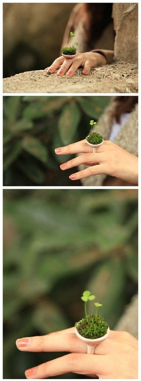 Tiny ring garden