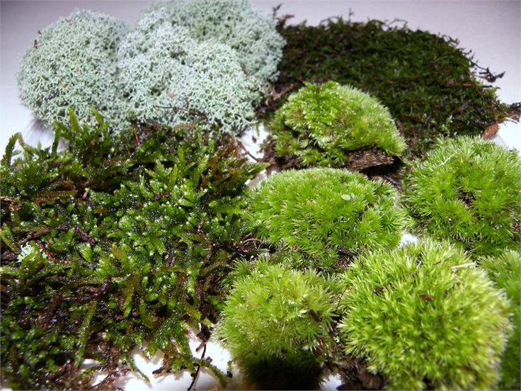 How To  Grow Moss On Concrete
