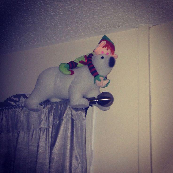 Buddy's decided he wants a polar bear ride along the curtain pole #elfontheshelf #elf #polarbear #christmas #mischief #buddytheelf