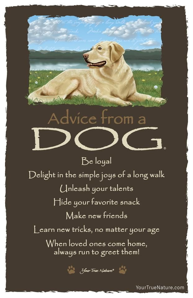 """Advice from a Dog, """"Make new friends."""" #frameable #quotes"""