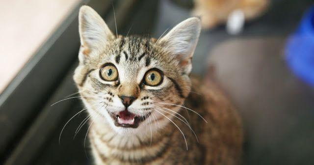 Pet Sitting: 5 τρόποι για να ανακουφίσετε το άγχος της γάτας σα...