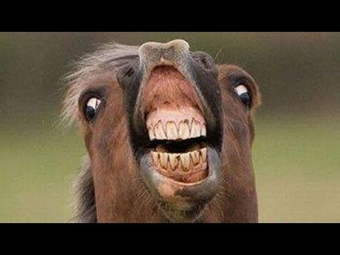 Best Funny Horse Videos Compilation 2015 HD / Funniest Horse Videos - YouTube