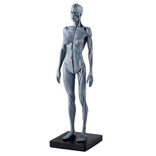 VERY100 Anatomie Figuren Modell muskelsystem muskel Lernmittel Kunstbedarf Manga Comic