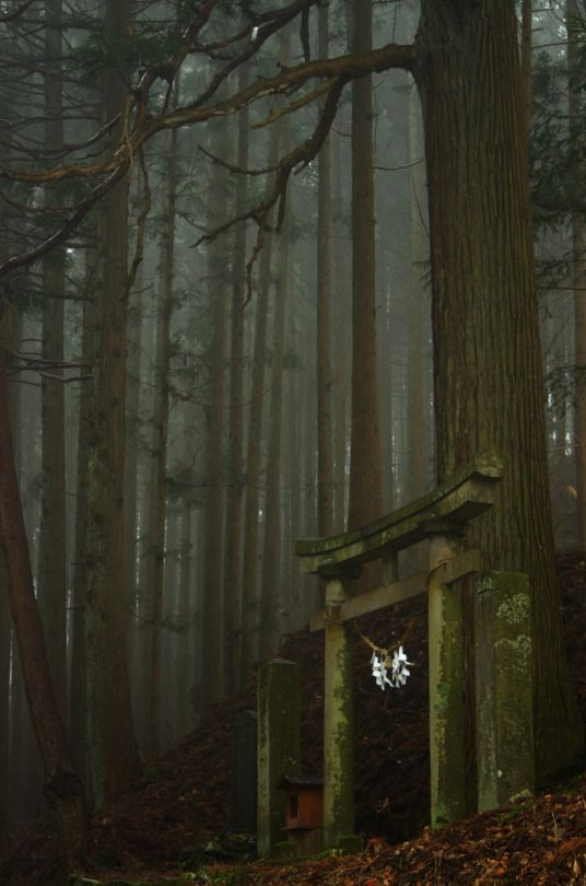 Shinto torii gate in the Japanese forest. Photography by : シモフリ (Do not remove credits)