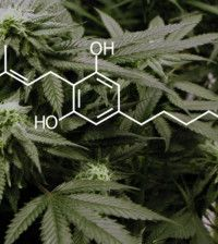 Is Cannabis a safe effective sleep aid? Cannabis affects sleep by acting on the endocannabinoid system.  REM sleep is decreased with cannabis use before bed, while stage 3 slow wave sleep is increased, the two stages are intertwined.  Research suggests there may be a few health benefits to offer. -Austin S.