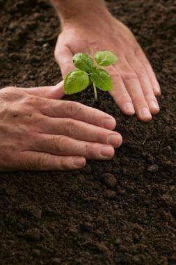 Best planting dates for transplants (Region 2): Garden State, Transplants Region, Green, Transplanting Seedlings, Transplant Seedlings, Cutting Growing