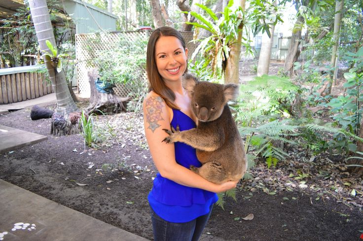 Koala bear hugs in Brisbane, Australia. (Click the image to find out more)