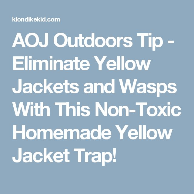 AOJ Outdoors Tip - Eliminate Yellow Jackets and Wasps With This Non-Toxic Homemade Yellow Jacket Trap!