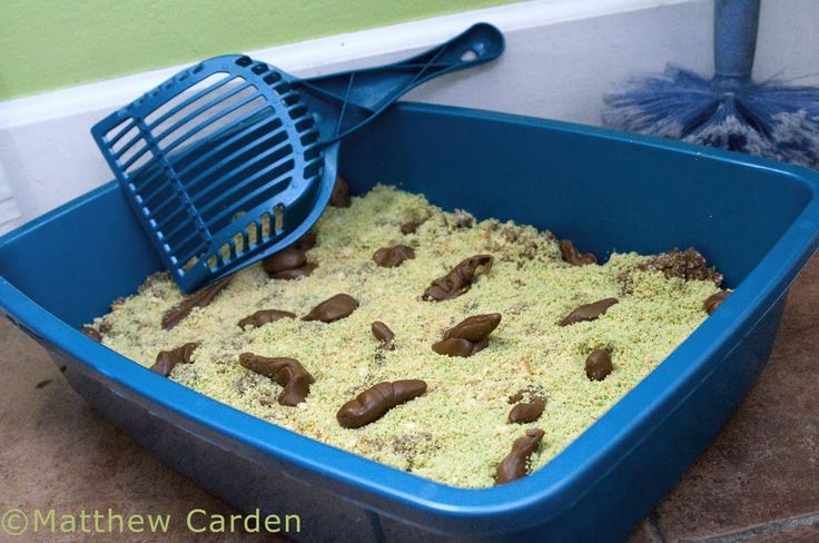 litter box cake 25 best ideas about kitty litter cake on 5556