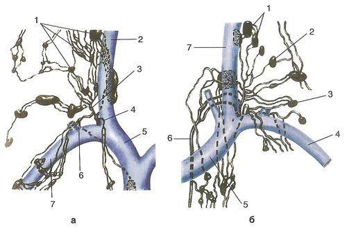 Шейные лимфатические узлы