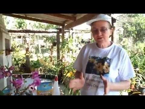 Como fazer adubo caseiro para orquídeas - YouTube
