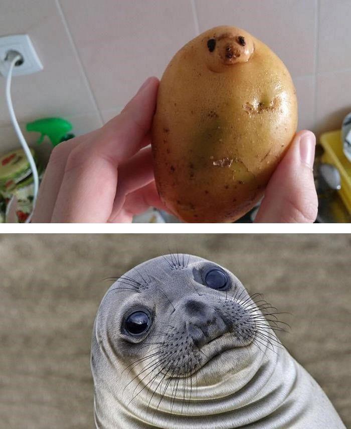 3 Potato Seal