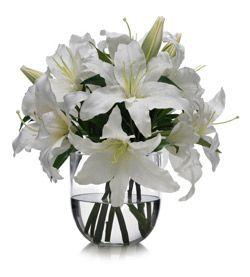 gladiolas blancas - Buscar con Google