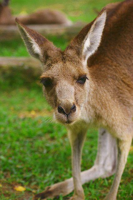 Brisbane (Lone Pine Koala Sanctuary)