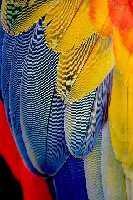 Photographing The Colors of Nature