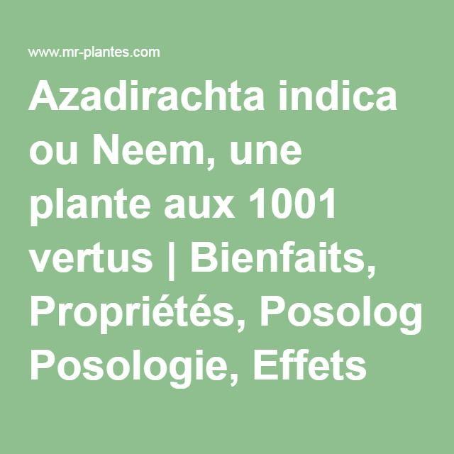 Azadirachta indica ou Neem, une plante aux 1001 vertus   Bienfaits, Propriétés, Posologie, Effets Secondaires