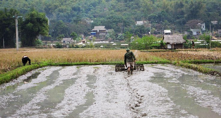 Hardworking people in Mai Chau. #vietnam #maichau #hardwork #travel