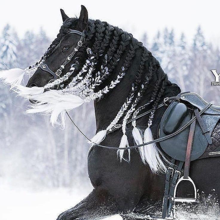 """Colors of Nature auf Instagram: """"Was für ein schönes Pferd! Diese Mähne auch, obwohl … – #auch #auf #Colors #Diese #Ein"""