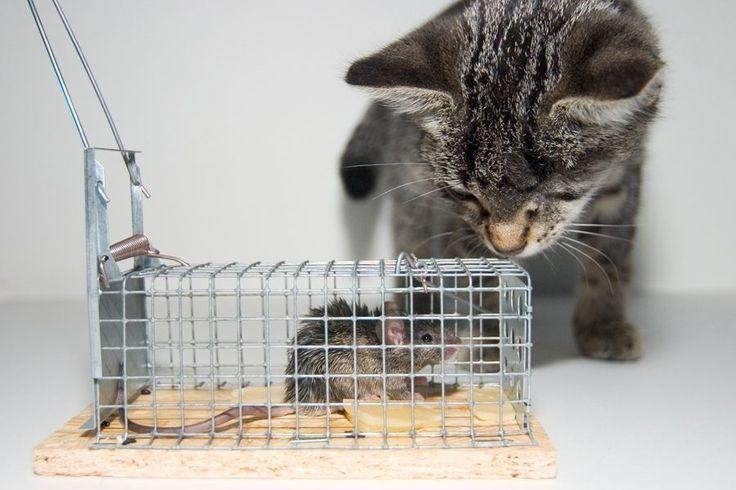 rodents rodent problem rats mice rodent control rat control mice control