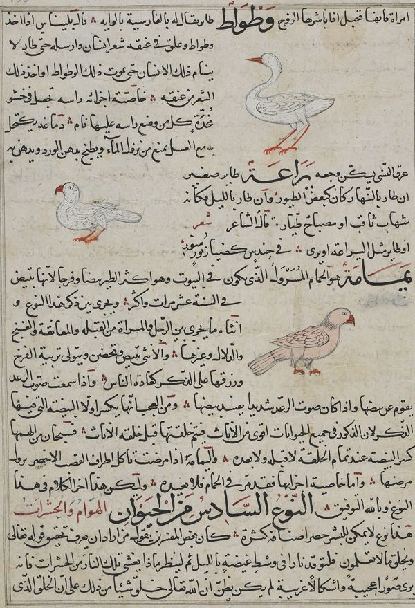 Folio from Aja'ib al-Makhluqat (Wonders of Creation) by al-Qazvini; recto: Mountain Swallow (Watwat), Gerboa (Yara'a), Wild Pigeon (Yamamah); verso: text early 15th century, Iraq or Eastern Turkey