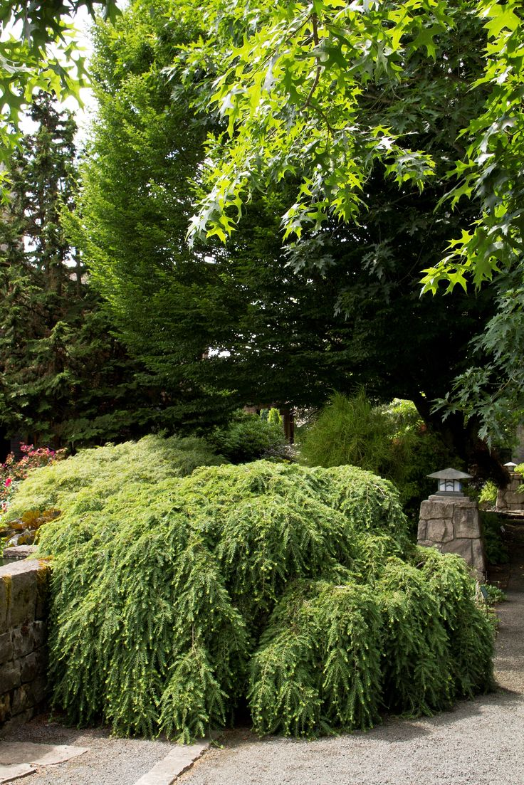 187 Best Images About Plants & Trees For The Landscape On