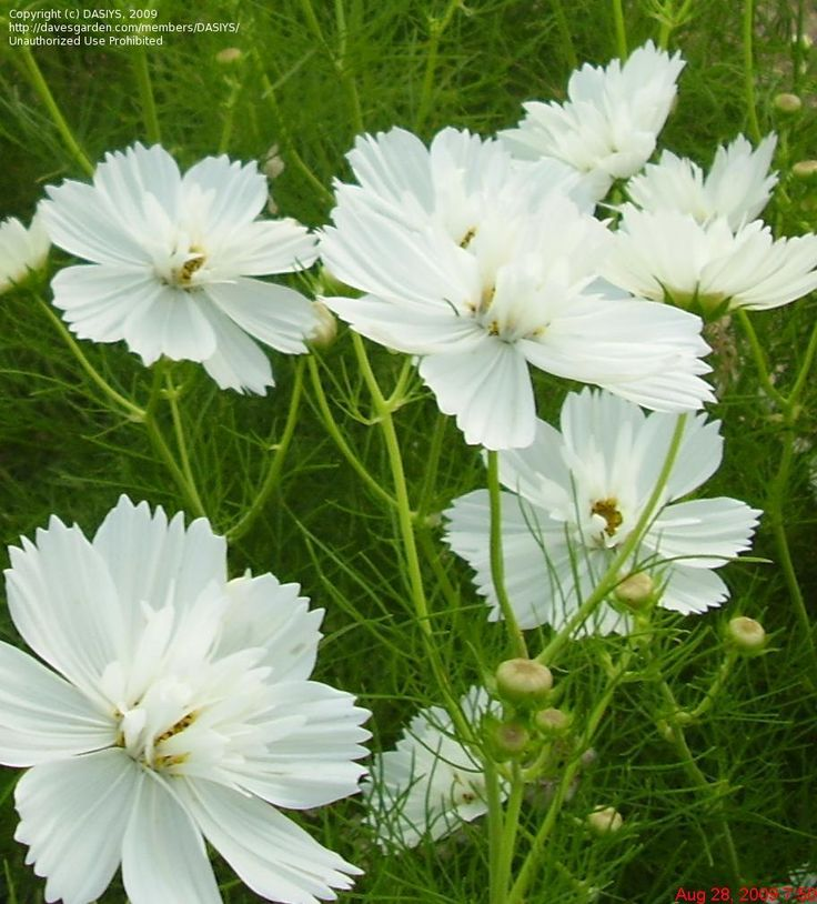 28 best White flowers images on Pinterest Plants Flowers and