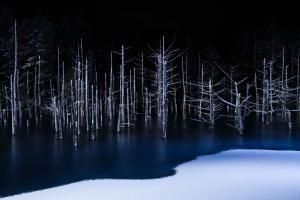 Winners' Galleries | World Photography Organisation