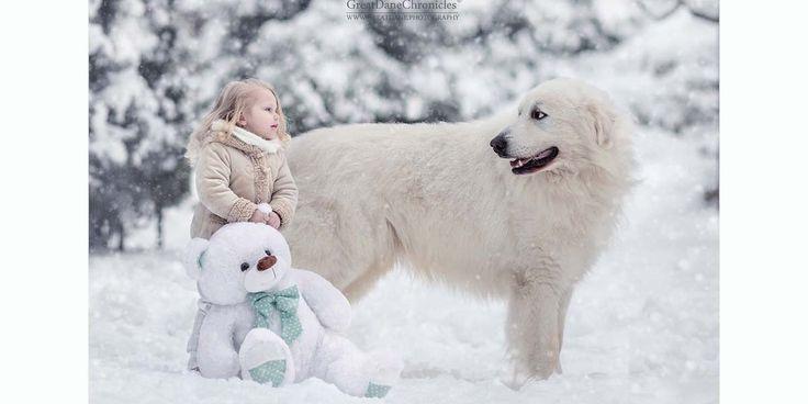 İçinizi ısıtacak bir proje: Küçük çocuklar ve büyük köpekler-  #köpekler #çocuklar #fotoğraf