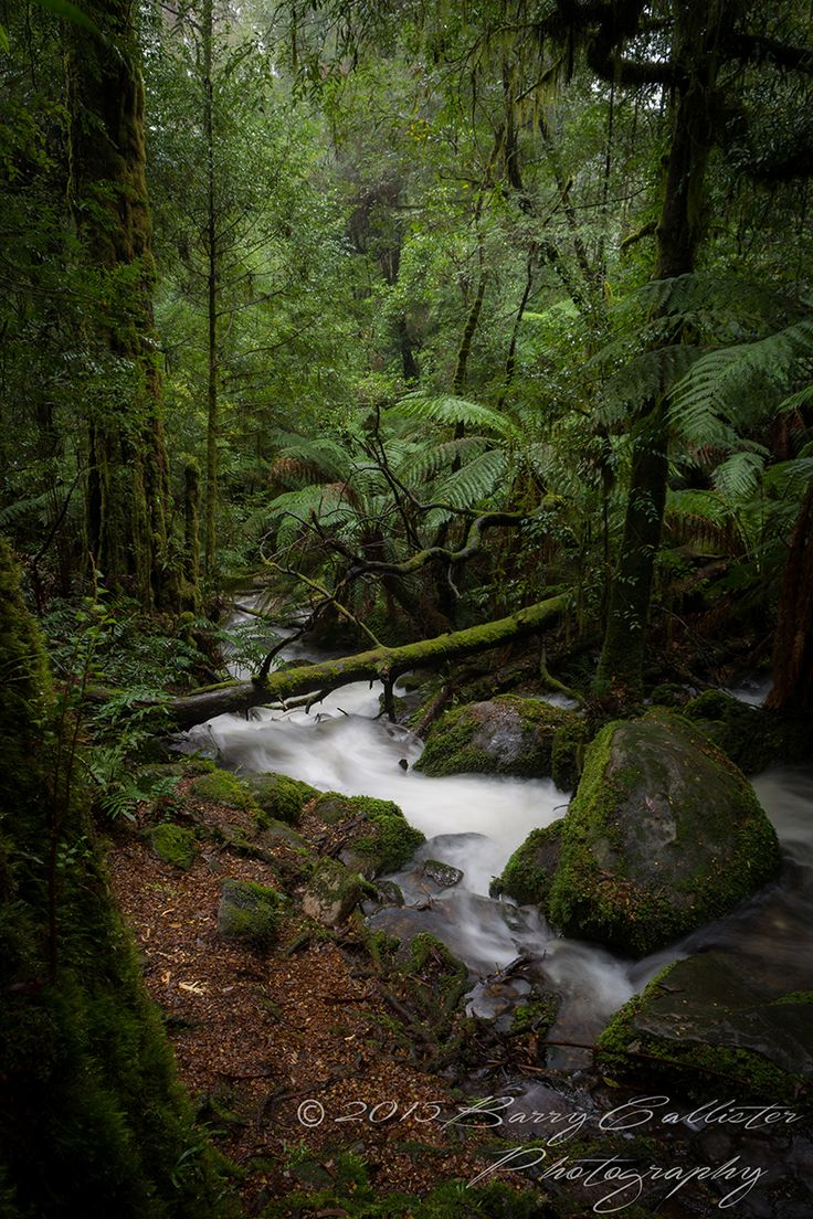 A waterfall rushes through the forest on Mount Donna Buang in Victoria, Australia