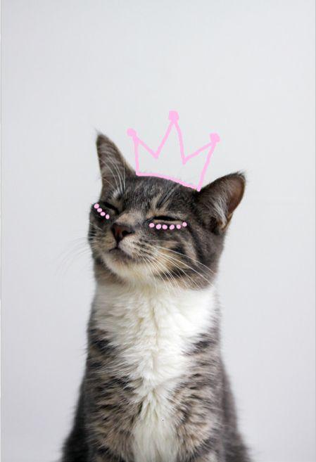 princess. ellie. -- this is so my cat! M E G H A N ♠ M A C K E N Z I E