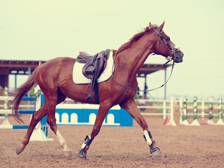 For some horse people looking for their next mount, the Thoroughbred is the obvious choice. While for many, they are a big 'no-no'. Here are ten reasons to change your mind. 1. They've seen it all.…