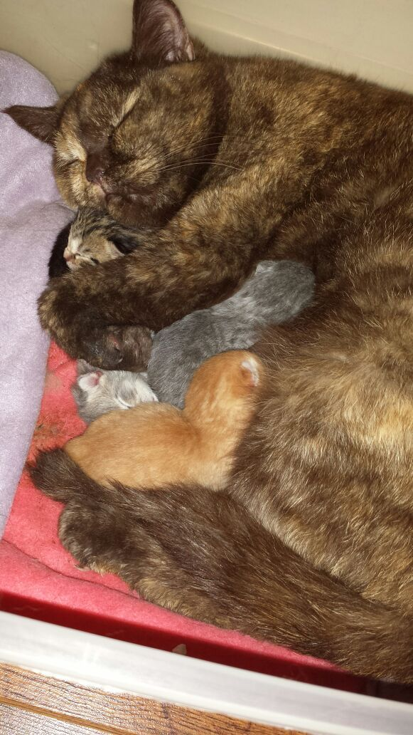 My cat gave birth today. She cuddles them and looks so content!