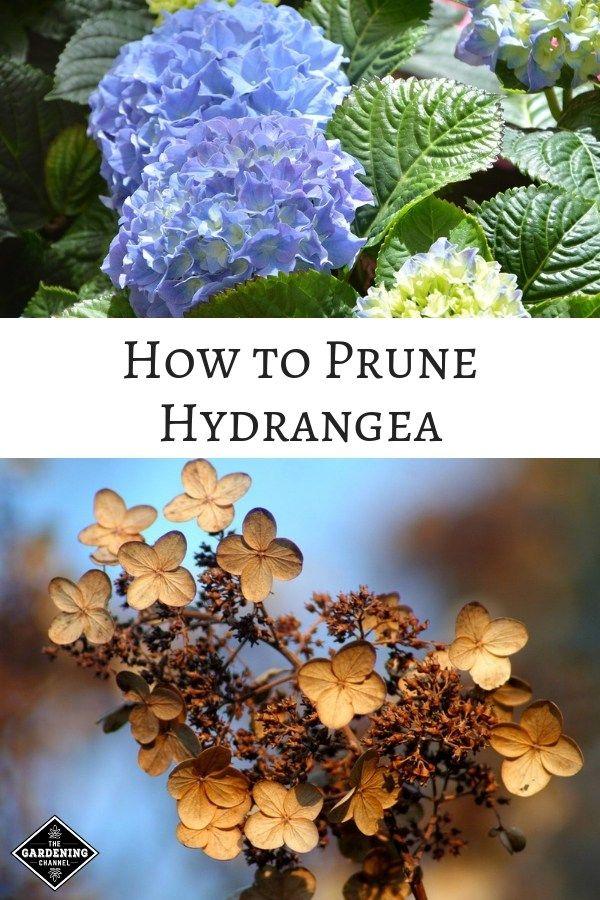 e535c537c9d772f24f758dbbaa43b7d9 - How To Take Hydrangea Cuttings Gardeners World