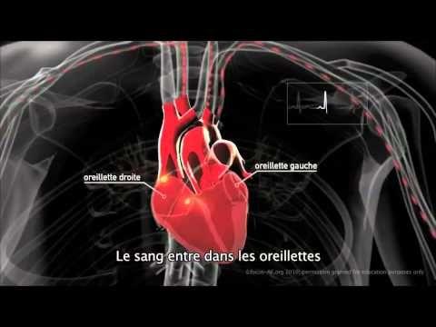 Découvrez comment fonctionne le coeur, en temps normal, sans troubles du ryhtme cardiaque, et partagez cette vidéo autour de vous !