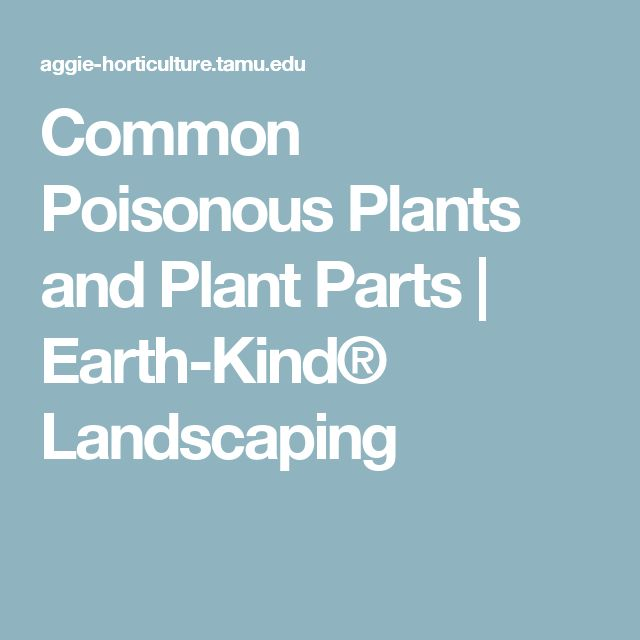 Common Poisonous Plants and Plant Parts | Earth-Kind® Landscaping