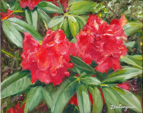 Rhododendrons flowering in the National Rhododendron Gardens at Olinda in the Dandenong Ranges, east of Melbourne, Victoria.  Oils on canvas panel.  20.3 cm high by 25.4 cm wide (8 inches by 10 inches) approximately.  Unframed. To check on availability for purchase, please visit http://www.daiwynn.com/artist/rhododendrons/