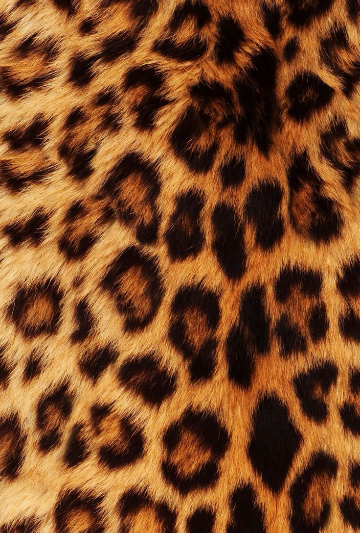leopard and red wallpaper - photo #39